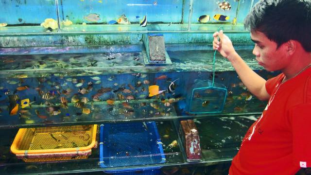 saving nemo the truth about the marine aquarium trade