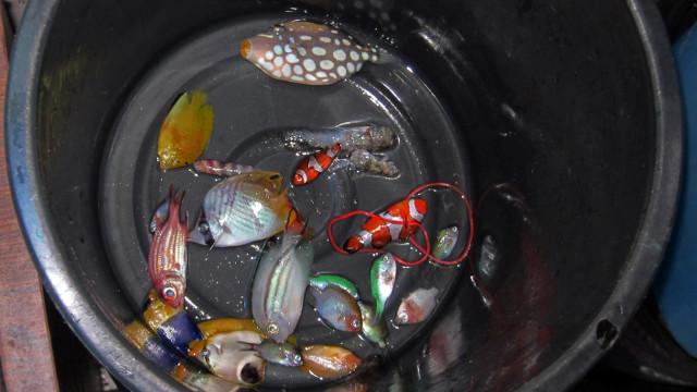 Saving Nemo: The truth about the marine aquarium trade