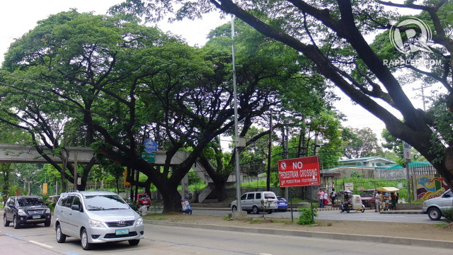 Green Groups To Dpwh Good Road Design Includes Trees