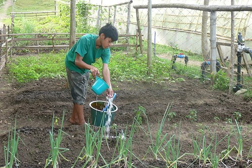 DAILY LIFE. Romnick tending his organic kitchen garden at GreenEarth. Courtesy of GreenEarth Heritage Foundation.