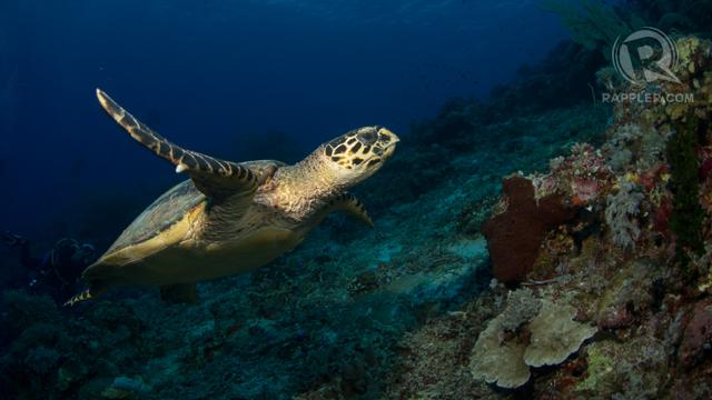 The Sulu sea experience
