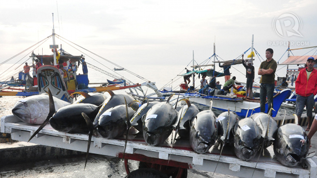 ENDANGERED. Declining catch and looming total tuna fishing ban in some ares in the tuna-rich Western Pacific region could spell disaster to the Philippine tuna industry. Photo by Edwin Espejo