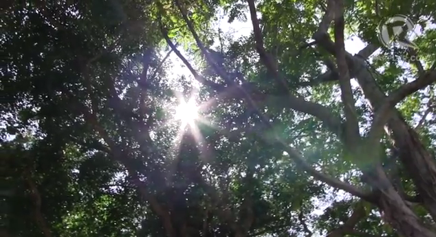 THE SUN SHINES THROUGH the canopy of Banyan trees that are found everywhere in Balesin