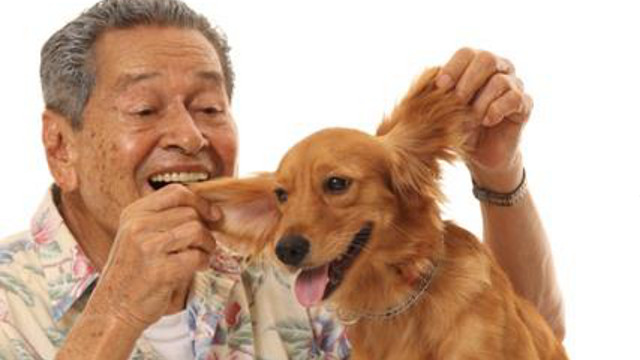 REFRESHING FILM NONETHELESS. 'Bwakaw' stars Eddie Garcia and aspin (Asong Pinoy) Princess. Photo from the official 'Bwakaw' Facebook page