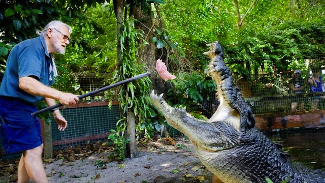 MONSTER CROC. George Craig has been looking after Cassius for the past 26 years. Photo from the Marineland Melanesia website