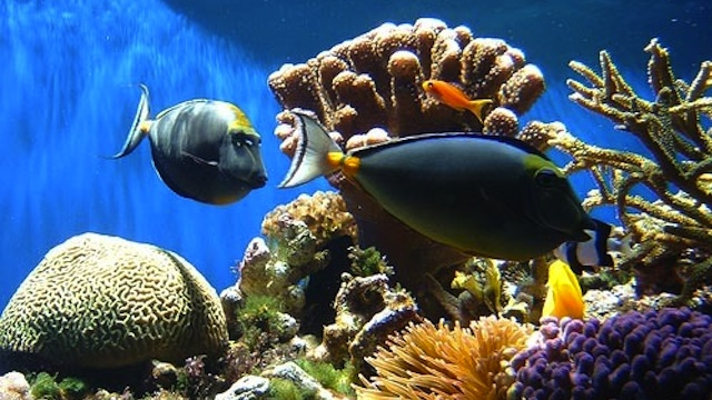 SEVERELY DAMAGED. China's coral reefs are being wiped out. Photo from www.china.org.cn