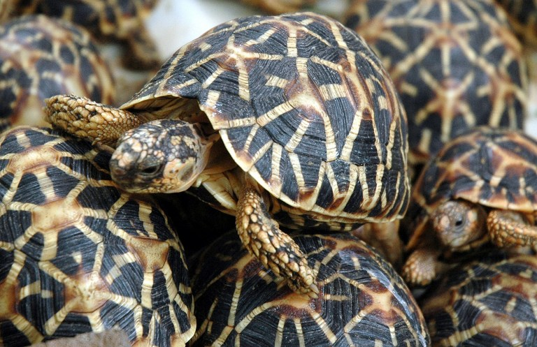 Demand for exotic pets pushes species to the brink