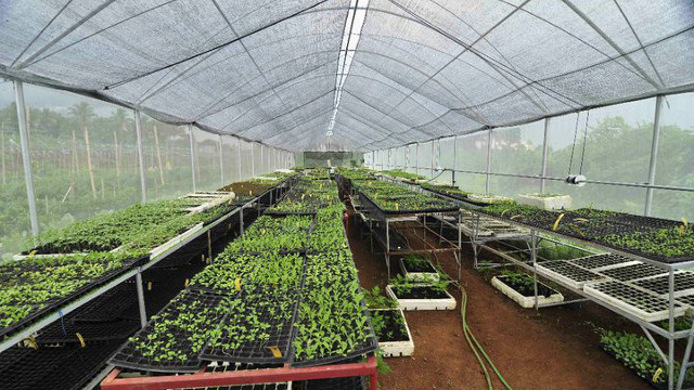 Organic veggies are grown in this greenhouse in Costales Farm