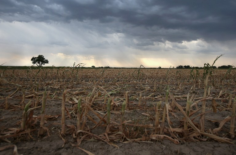 Rain clouds move over the remnants of parched corn stalks on August 22, 2012 near Wiley, on the plains of eastern Colorado. John Moore/Getty Images/AFP