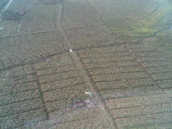 EXTENT OF DAMAGE. &quot;Flattened banana trees as far as the eye can see.&quot; Photo and caption by Interior Secretary Manuel Roxas II 