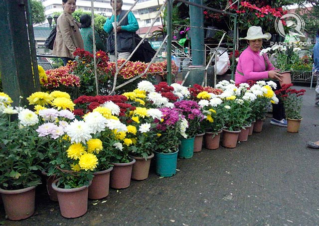 Gardens destroyed, Baguio sells cheaper flowers for Undas