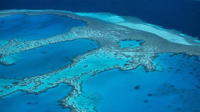Australia probes Great Barrier Reef board over 'mining links'