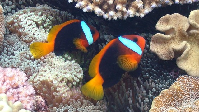 Image courtesy of the Great Barrier Reef Marine Park official page on Facebook