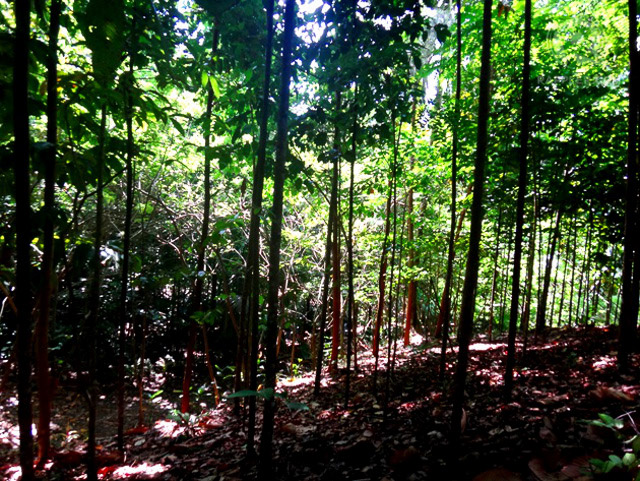 Native trees, many of them threatened or endangered, at Liptong Woodland