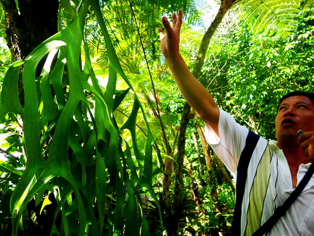 Tatay Ete explaining the benefits of trees and plants at Liptong