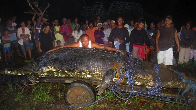 HUNTED DOWN. This file photo taken on September 4, 2011 shows villagers looking at the 21-foot (6.4 meter) saltwater crocodile caught in the town of Bunawan, Agusan del Sur. AFP PHOTO