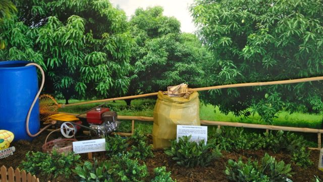 HOW DO MANGOES GROW? This life-sized diorama educates guests on how the mango is cultivated for harvest.