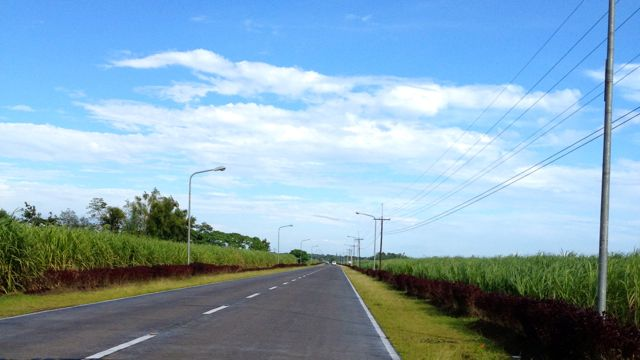 SUGARCANES PAVE THE WAY to Silay from the airport