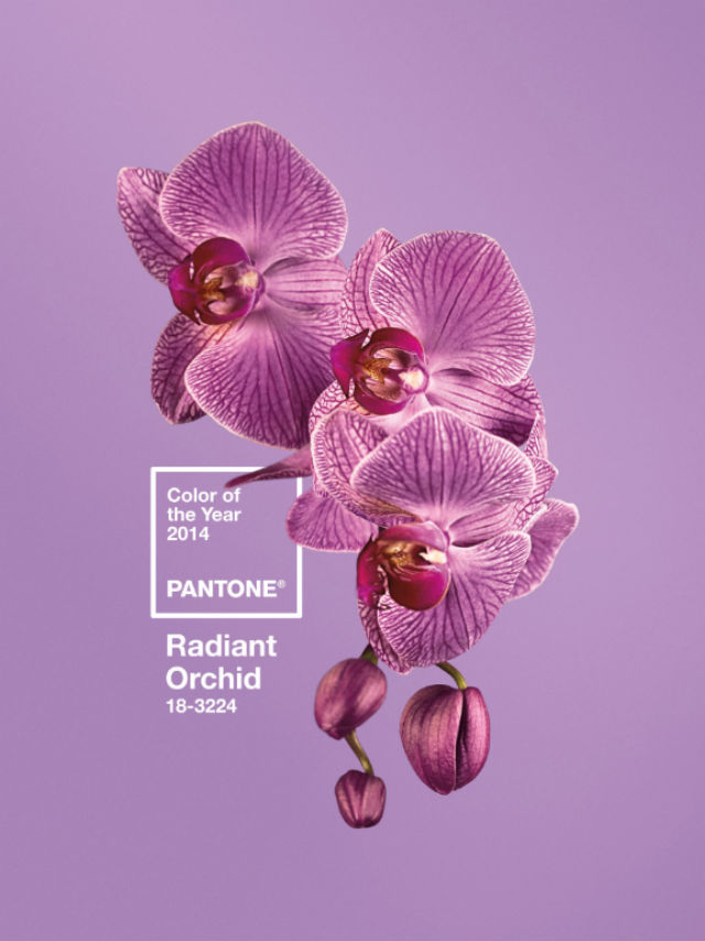 """'Radiant Orchid' is colour of the year for 2014. Pantone says the colour """"inspires confidence and emanates great joy, love and health."""" Photo from Pantone's website."""
