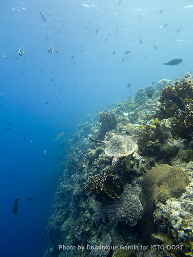 OTHER WORLD. The diversity of species is what makes Tubbataha Reef spectacular.