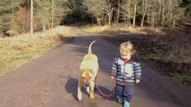 BEST FRIENDS. Our pets care for us, too. Watch how this sharpei lets a child play. Screen grab from YouTube (Julian Burett)