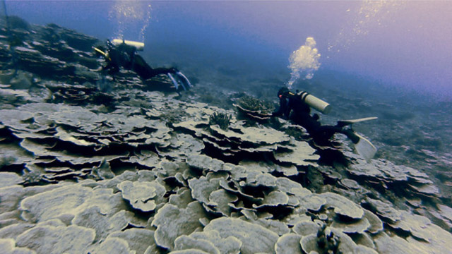 Filipinos dive into the waters of Benham Rise for the first time
