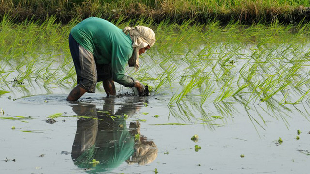 How Climate Change Threatens Our Food Security