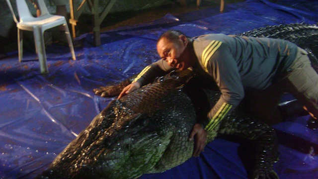 How captivity killed Lolong